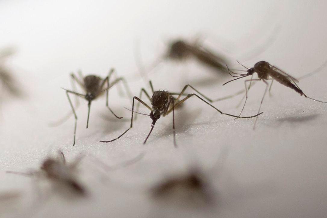 Photo of تورنتو – 27 حالة بشرية من فيروس غرب النيل هذا الصيف
