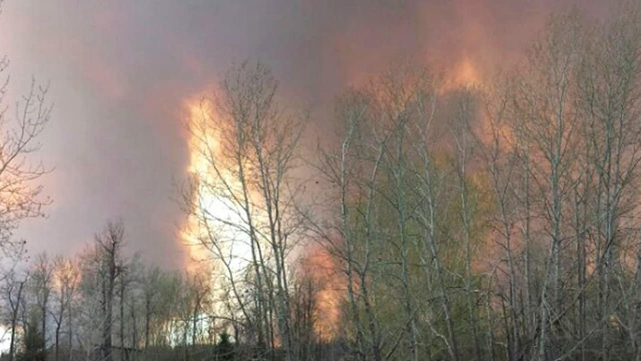 Photo of #حفل عائلي يتسبب بـ #حرق 470 كيلومترا مربعا من #الغابات بـ #أمريكا