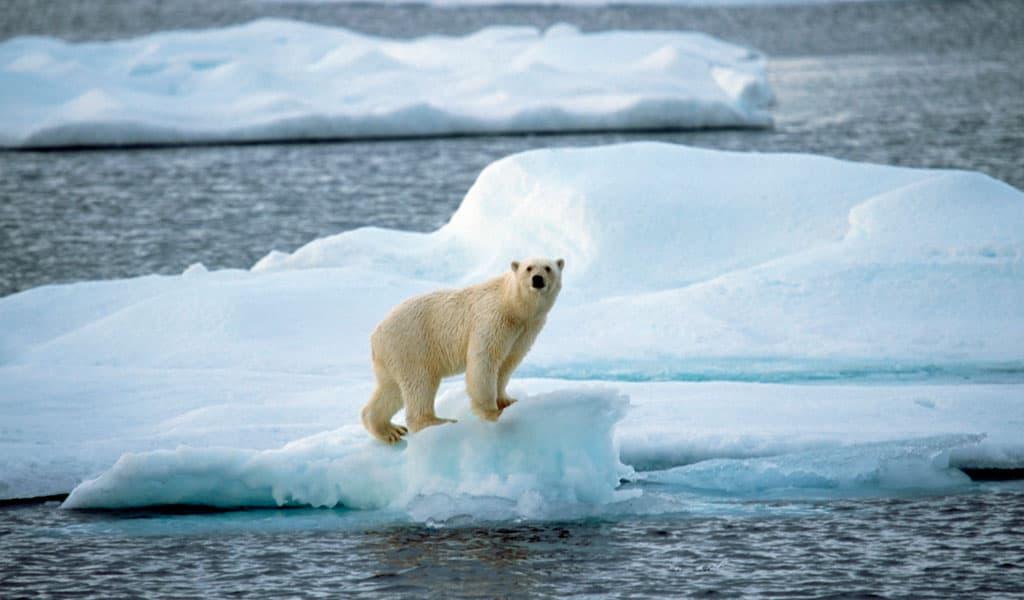 اكتشاف علامات كارثة مناخية قريبة في كندا