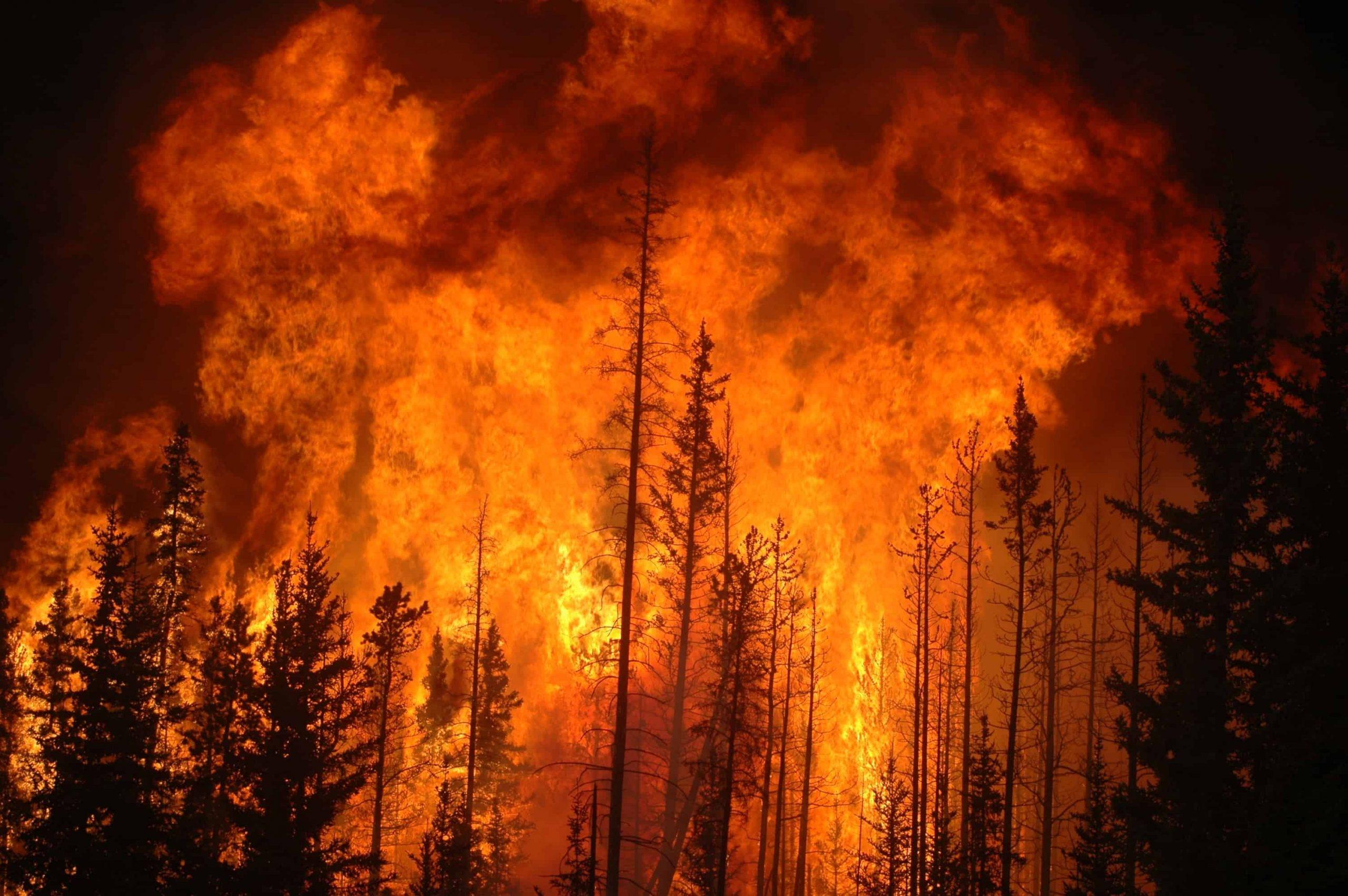 Photo of يقول العلماء إن هناك صلة واضحة بين تغير المناخ وحرائق الغابات الشديدة المتزايدة في ألبرتا وكولومبيا البريطانية
