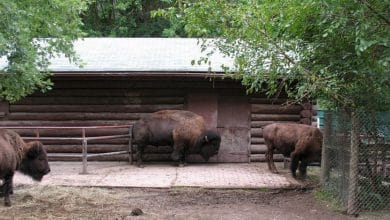 Photo of إعادة افتتاح حديقة الحيوانات العليا، مزرعة ريفرديل يوم الثلاثاء